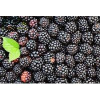 Wholesale Spray Dried Organic Food Ingredients Blackberry Fruit PowderFor Skin Care from china suppliers