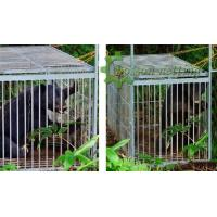 Wholesale Large animal trap cage from china suppliers