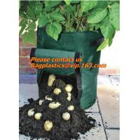 Wholesale vegetables, fruits, seeds, bedding plants, tomatoes, peppers, cucumbers, tree starters, potato bag, Hydroponics Garden from china suppliers