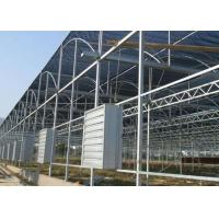 Wholesale Hot Dip Galvanized Steel Greenhouse Venlo Type For Farming Planting from china suppliers