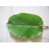 Wholesale Kratom extract from china suppliers