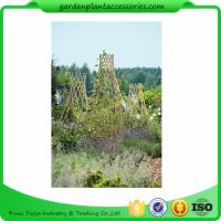 Wholesale Straight Garden Bamboo Stakes from china suppliers