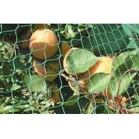 Wholesale Fruit Protection Net from china suppliers