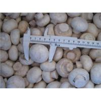 China supply frozen mushroom for sale