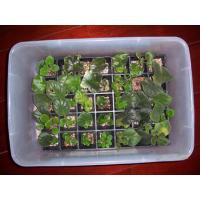 Wholesale propagation tray from china suppliers