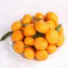 Guangdong Mandarin for sale