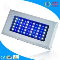 Wholesale 55*3W LED Marine Fish Aquarium Lights from china suppliers