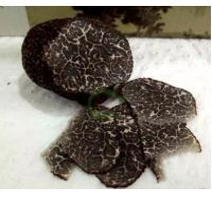 China Black Truffle noire Wild perigord truffle Tuber melanosporum organic sliced Hei Song lu on sale
