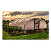 Wholesale Strawberry Hydroponics Plastic Film Greenhouse , Polyethylene Film Greenhouse from china suppliers