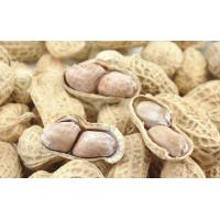 Wholesale Spiced Peanut Microwave Baking Equipment from china suppliers