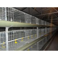 Wholesale H Type Cages for Growing Broilers from china suppliers
