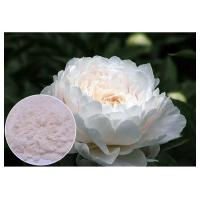 Wholesale Renovating Skin Natural Cosmetic Ingredients Off White Color Paeonia Lactiflora Powder from china suppliers