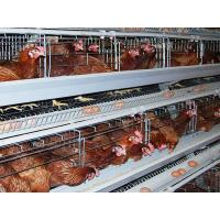 China Layer Cages for sale