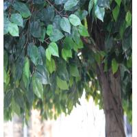 Wholesale plastic  banyan tree, artificial ficus tree from china suppliers
