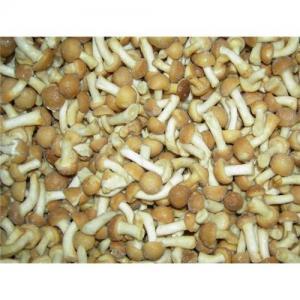 China IQF Frozen Nameko Mushrooms on sale