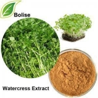 Wholesale Nasturtium Officinale R. Br. Herbal Extract Powder from china suppliers