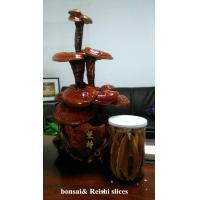 Wholesale reishi mushroom series:  bonsai from china suppliers
