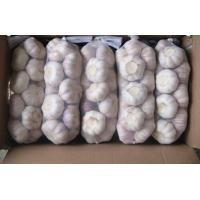 Buy cheap Cold Storage Fresh Red Garlic from wholesalers