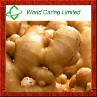 Wholesale High Purity herbal ingredient pure natural tumeric Extract 95% Curcumin HPLC from china suppliers