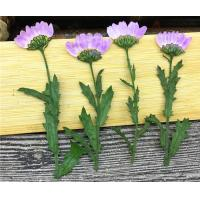 Wholesale Purple Dried Chrysanthemum Flower Color Optional For Candle Decoration from china suppliers