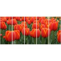 Wholesale 5 panel panoramic canvas prints with redyellow tulips from china suppliers