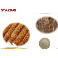 Wholesale Root And Stem Male Enhancement Powder Wild Yam Powder Fine Powder from china suppliers