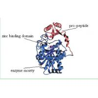 Buy cheap Recombinant Carboxypeptidase B is an  excision enzymes  with Animal Components Free from Wholesalers