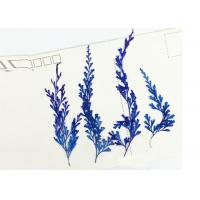 Buy cheap 6 Different Colors Fern Leaves Real Dried Flowers, Mounting Pressed Flowers For Home Decoration from wholesalers