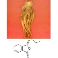 Wholesale Angelica Extract. from china suppliers