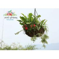 Wholesale Semi-Circle Light Weight Hanging Planter Basket For Home & Garden from china suppliers