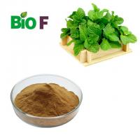 China Medicinal Powdered Herbal Extracts Pure Peppermint Extract Powder on sale