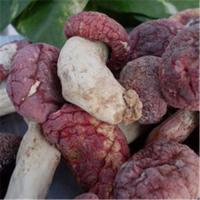 China Wholesale authentic wild red mushrooms on sale