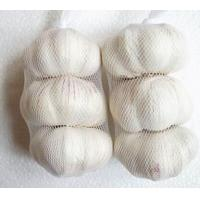 Buy cheap Chinese selected quality normal white garlic, pure white garlic for sale from wholesalers