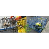 Wholesale Seafood trap cage from china suppliers