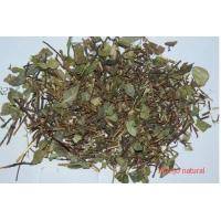 Trachelospermum jasminoides(Lindl.) Lem.whole plants,Luo Shi,Chinese herb for sale