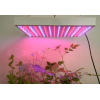 Wholesale Red / Blue 15W AC90 - 260V 650nm Led Plant Growing Lighting Ce & RoHs approval from china suppliers