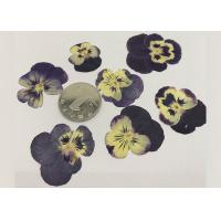 Wholesale Garden Pansy Small Dried Flowers 2.5CM Purple Color For Wall Painting Raw Materials from china suppliers