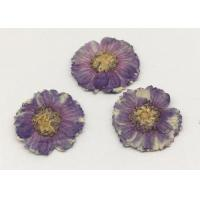 Wholesale Beauty Small Dried Flowers Diameter 1.5CM Color Optional For Necklace Ornament from china suppliers