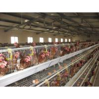 Wholesale 96 Birds, 120 Birds, 128 Birds, 160 Birds, 256 Birds Layer Chicken Cages from china suppliers