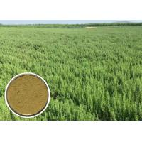 Wholesale Ursolic acid Natural Cosmetic Ingredients Rosemary Extract Anti - oxidation CAS 77 52 1 from china suppliers