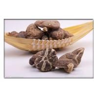 Quality Dried mushroom, ediable mushroom , Dried Agaricus campestris,Dried Shiitake Mushroom for sale
