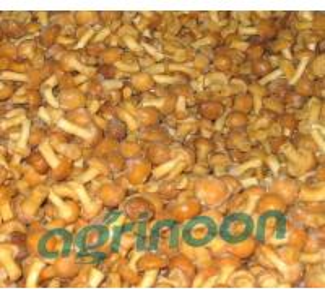 China frozen nameko mushroom on sale