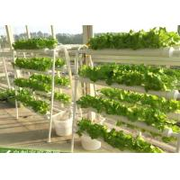 Wholesale Agriculture Hydroponic Lettuce Growing Kit 98cm x 60cm x 103cm Easy Assemble from china suppliers