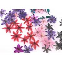 Buy cheap Time Gems Decorations DIY Pressed Flowers / Hand Pressed Flowers Multicolor from wholesalers