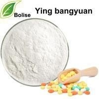 Wholesale 99.5% Ying Bangyuan Pharma Herbal Extract Powder from china suppliers