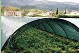 Wholesale Dark Green , Black Sun Shade Netting , Hdpe Anti UV Agriculture Net from china suppliers