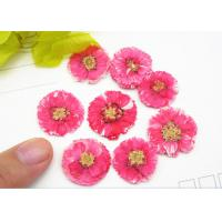 Wholesale 1 CM Small Dried Flowers Dye Absorption Daisy For Wall Painting Decoration from china suppliers