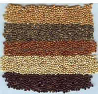 Wholesale Millet (panicum) from china suppliers