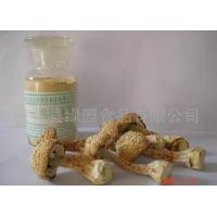 China Agaricus Blazei Murill on sale