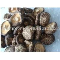Buy cheap White flower mushroom from wholesalers